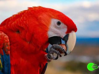 Bird missing from western sydney