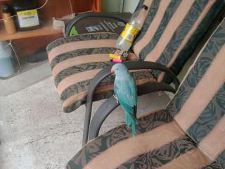 Found bird