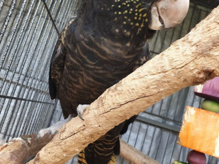 Bird missing from merrylands