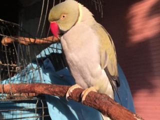 Bird missing from Sydney