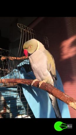 bird-missing-from-sydney-big-0