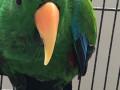 bird-stolen-from-greenacre-small-0