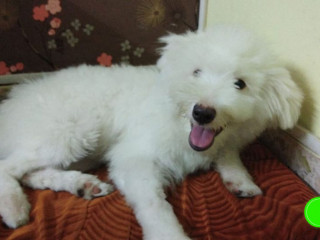 Pet missing from Thana street