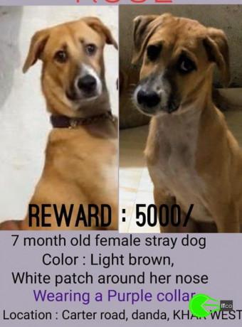 dog-missing-from-carter-road-danda-big-0
