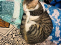 cat-missing-from-vakola-santacruz-small-1