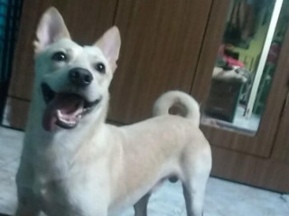Male Dog Lost near Amboli , jogeshwari west