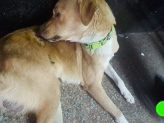 Dog found at borivali station