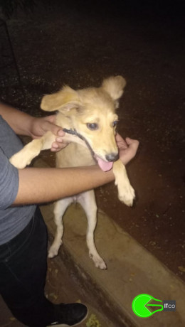 puppy-found-big-0