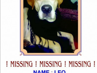 Pet missing from Bhayander