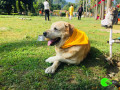 lost-my-dog-in-moradabad-small-0