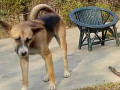 my-doggie-has-been-missing-since-14-02-2020-5pm-in-survey-beltola-guwahati-small-1
