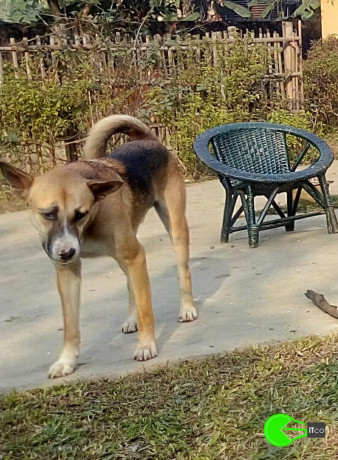 my-doggie-has-been-missing-since-14-02-2020-5pm-in-survey-beltola-guwahati-big-1