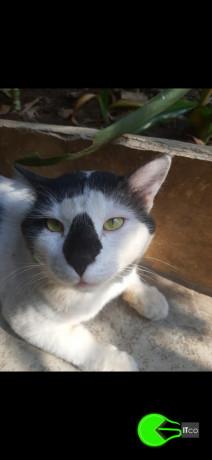 cat-missing-big-0