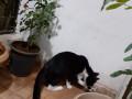 cat-found-in-mira-road-near-hub-town-small-0
