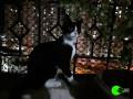 cat-found-in-mira-road-near-hub-town-small-1