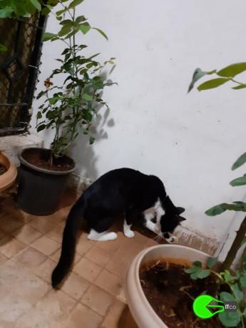 cat-found-in-mira-road-near-hub-town-big-0