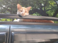 lost-cat-cat-has-been-missing-for-3-days-small-1