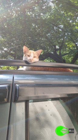 lost-cat-cat-has-been-missing-for-3-days-big-1