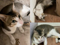 lost-cat-found-near-lokhandwala-looks-very-scared-and-is-friendly-small-0