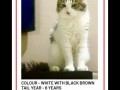 a-cat-missing-from-kothrud-pune-small-0
