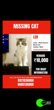 a-cat-missing-from-kothrud-pune-big-1
