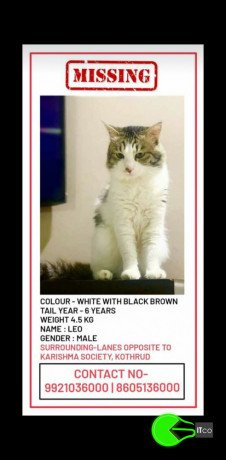 a-cat-missing-from-kothrud-pune-big-0