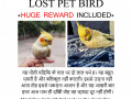 missing-pet-bird-small-2