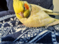 missing-pet-bird-small-1