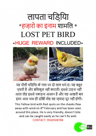 missing-pet-bird-big-2