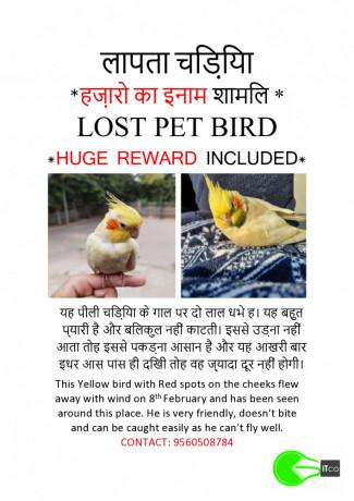 missing-pet-bird-big-2