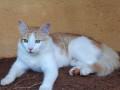 lost-my-cat-rumi-small-1