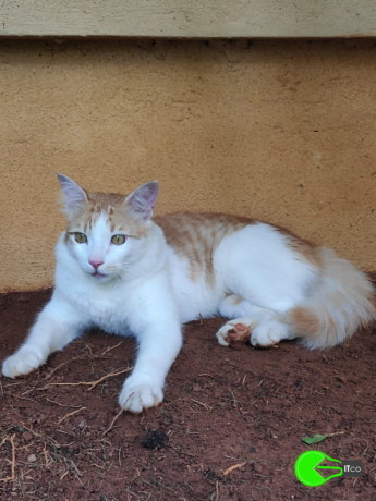 lost-my-cat-rumi-big-1