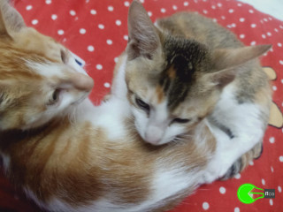 Lost My Cat Near Geeta Gaurav Phase 1, Mira Road East