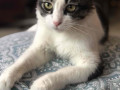 grady-our-pet-cat-is-missing-small-4