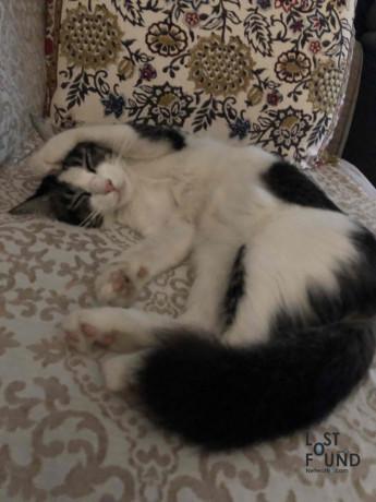 grady-our-pet-cat-is-missing-big-3