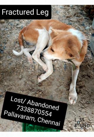 lost-dog-pallavaram-big-0