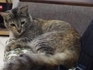 Pet missing from Alandur