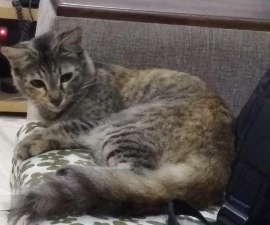 pet-missing-from-alandur-big-0