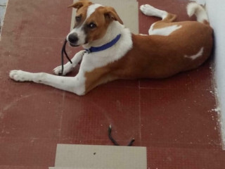 Pet missing from Ayanapakam