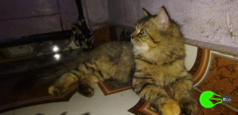 pet-missing-from-vikhroli-big-0