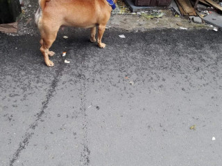 Found pet at Kandivali (West) Market/Station Road.