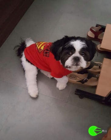 pet-missing-from-nibm-kondwa-big-0