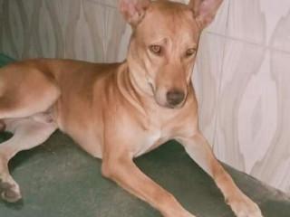 Pet missing from Govandi