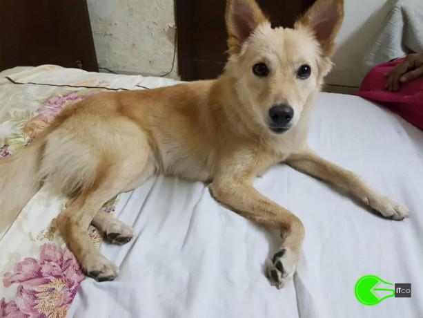 pet-found-near-alaknanda-big-0