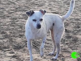Petite chienne trouvée abandonnée à la plage de mugoni