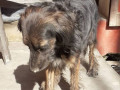 found-pet-in-kapurdhara-small-0