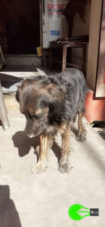 found-pet-in-kapurdhara-big-0