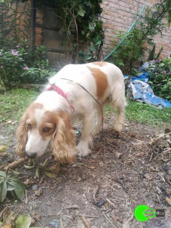 pet-found-around-shankhamul-pool-are-big-0